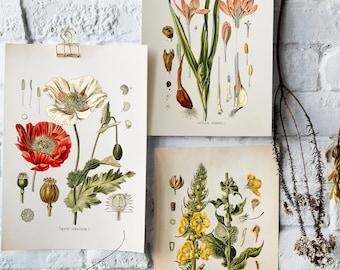 Vintage Botanical Print Set, Customizable Sizes, Set of Three Giclée Prints of Vintage French Illustrations, Antique Wall Art, Kitchen Art