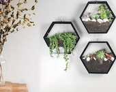 Hydroponic Hexagon Hanging Planter Indoor, Hanging Wall Planter Indoor, Honeycomb Geometric Terrarium, Air Plant Holder, Florarium Wall Vase