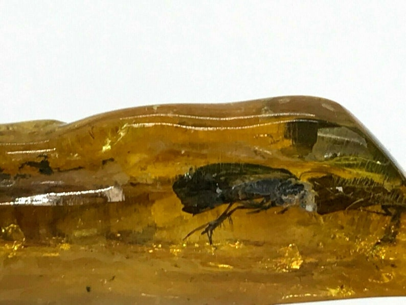 2 Insects Inclusion Fossil in Natural Baltic Amber piece with insect 4,1g 6414
