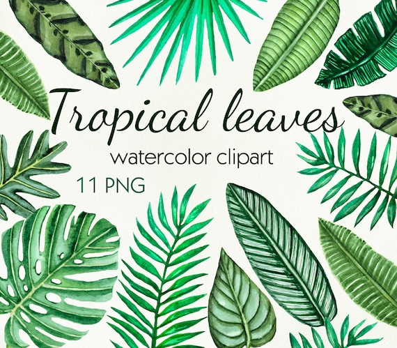 Watercolor Tropical Clipart Hand Painted Palm Leaves Clip Etsy 30 photo file 4256 x 2832 px resolution 300 dpi. etsy