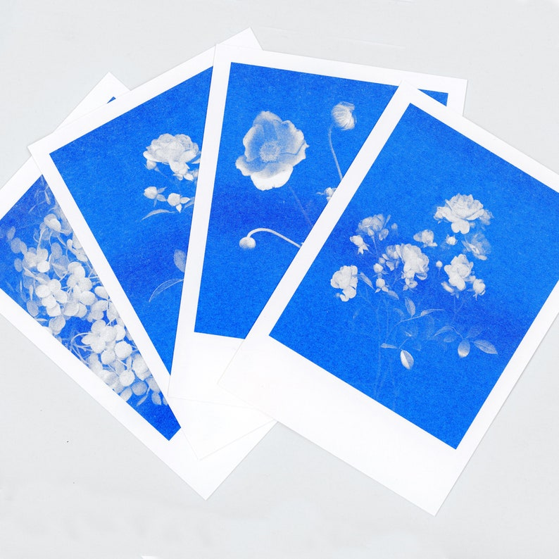 Blue-blooded Quartet 4 Floral Risograph Postcards by Mr and Mrs Rio