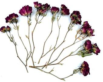 Beer Hop Stems 3 Dried Hops Flowers Stems Green Hops Flowers with stems Dried Hops Bouquet Hops Flowers with stems Bridal bouquet Hops