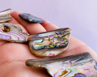 Abalone Shells From New Zealand / Brings Peace, Compassion & Love / Good For People Who've Suffered Trauma / Soothes Nerves