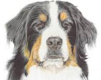 PDF AmiDogs Bernese Mountain Dog amigurumi dog CROCHET PATTERN | Etsy | 270x340