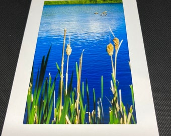 Matted photo of plants and water feature
