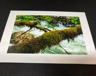 Matted woodsy scene photo card
