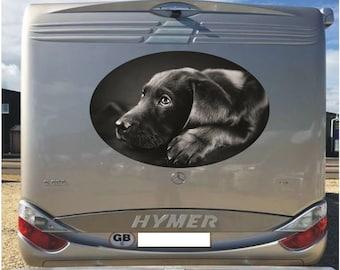 Black Labrador 1000mm graphics stickers campervan caravan horsebox motorhome MH07/1000