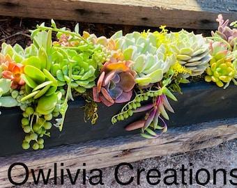 A Succulent filled centerpieces  gifts  decor  wedding   birthday gift box, succulent planter , succulent arrangement ,