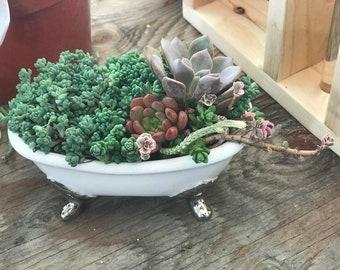 A  succulent bathtub planter succulent arrangement  succulent Gifts , Sympathy Gift, Birthday Gifts, gifts for everyone