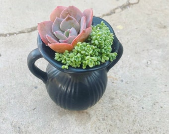 A simple Mother's Day Succulent arrangement , Ceramic  pot , Sympathy Gifts , Client Gift , Birthday Gifts