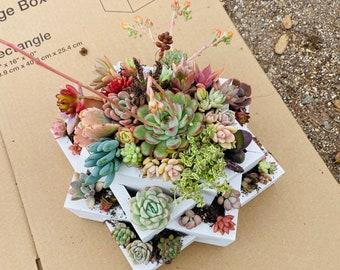 A Succulent arrangement| succulent planter | succulent centerpiece |succulents | weddings| Gifts| decor|bday|Sympathy Gift