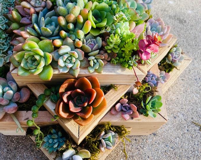 Succulent Planter , Large Succulent Centerpiece Planter , Succulent Arrangement , Succulents