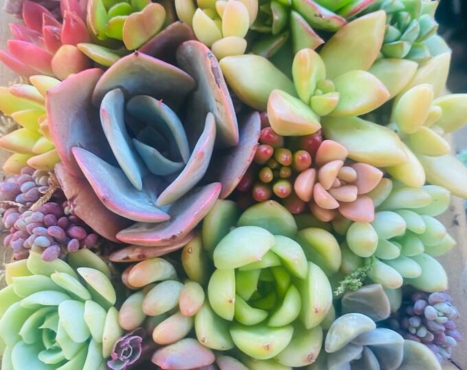 Succulent Planter with live succulents , Succulent Arrangement, Succulent centerpieces , Wedding Gifts , Sympathy Flowers ,