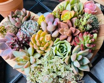 Succulent heart shaped arrangement , succulent planter