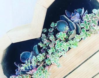 succulent heart planter | succulent arrangement|succulent gifts |succulents |birthday gift |wedding |bride|sympathy gift