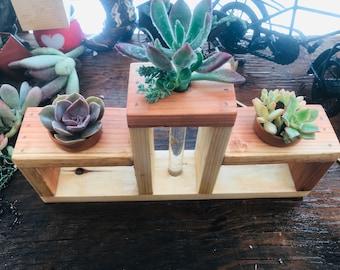 planter & water propagation stand,succulents, succulent cuttings , succulent gifts  , succulent arrangement, Valentine's Day arrangements ,