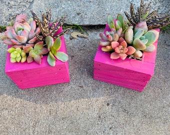 Succulent gift and party favors|arrangements| Birthday Day Gifts , succulent planter , Succulent Arrangement , Barmitzah