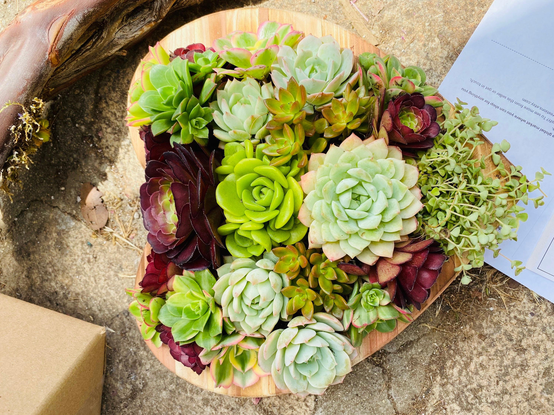 Succulent Gift Succulent Planter Succulents Gifts Party Favors Succulent Decor Birthday Gift Box Graduation Wedding