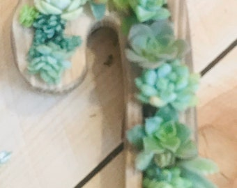 Christmas 12 inch succulent filled candy cane shaped planter  |succulent candy cane |candy cane||gifts |christmas decorations