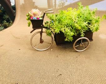 Succulent planter bike with succulents