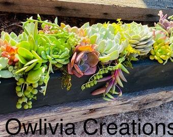 Succulent centerpiece , Succulent Planter . Succulent arrangements