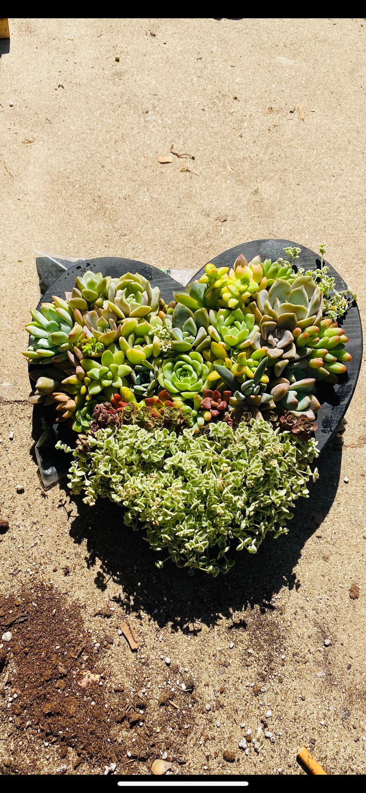 Valentines Charcoal Succulent Heart Planter Valentines Day Heart Arrangement Succulents Gifts For Her Succulents Succulent Gifts