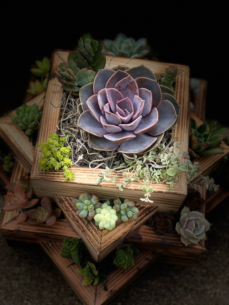 Valentines Day Succulent Gifts Sympathy Giftsucculent Etsy