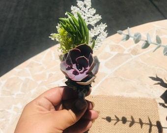 Succulent Groom bouteinerres