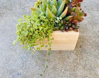 A Succulent planter box arrangement| succulent Gifts | Client Gifts |Birthday Gift Box |Sympathy Gift| Succulent Centerpieces|