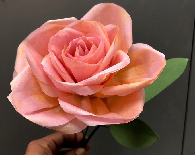 Garden rose in tissue