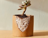 House of Harlow 1960 Creator Collab - Geode Planter, small succulent planter, air plant holder