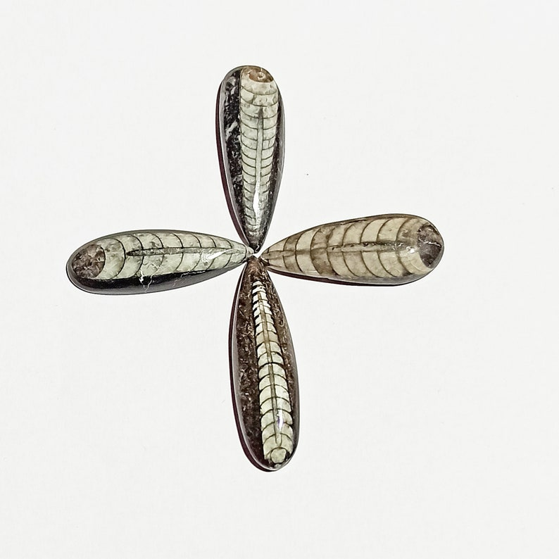 Natural Orthoceras Hand Polish Gemstone Amazing Quality Orthoceras Black /& White Color Pear Shape 4 Pcs Lot Cabochon For Healing Power