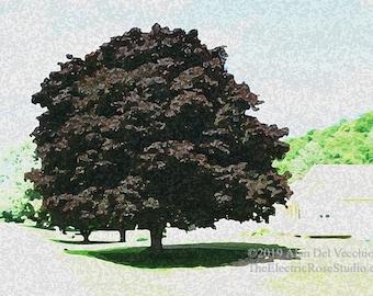 Black Maple---- Landscape Giclée Print by Alan Del Vecchio