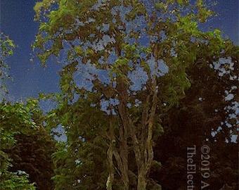 A Tree in Old Bennington ------- Landscape Giclée Print by Alan Del Vecchio