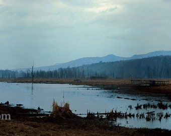 Wetlands Pond----- Landscape Giclée Print by Alan Del Vecchio