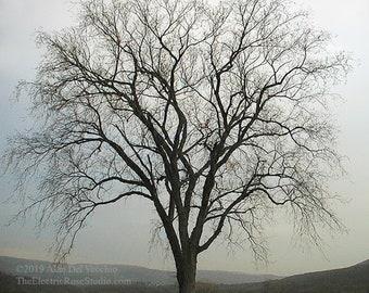 Salisbury Tree---- Landscape Giclée Print by Alan Del Vecchio