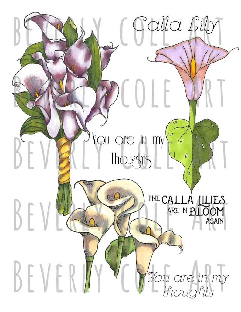 Calming Callas Stamp Set for collage cards scrapbooking and image 3