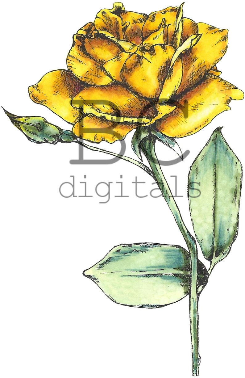 BONUS Yellow Rose Vintage Roses & Birds Digital Stamp Set. image 2