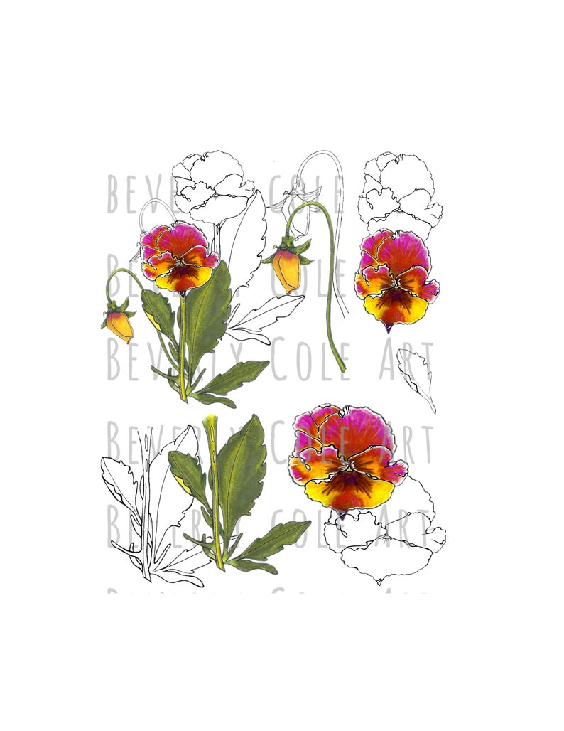 Perfect Pansy Stamp Set PNG's JPG's for Crafting image 0