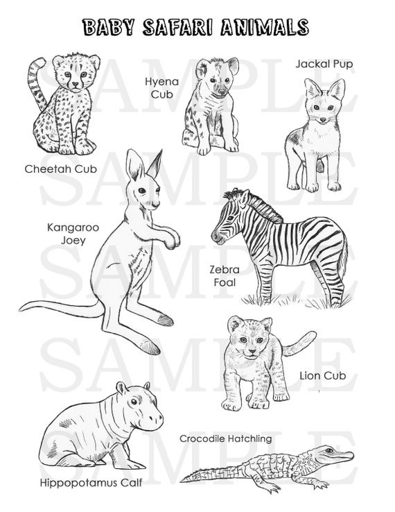 Baby Safari Animals Coloring Page Etsy