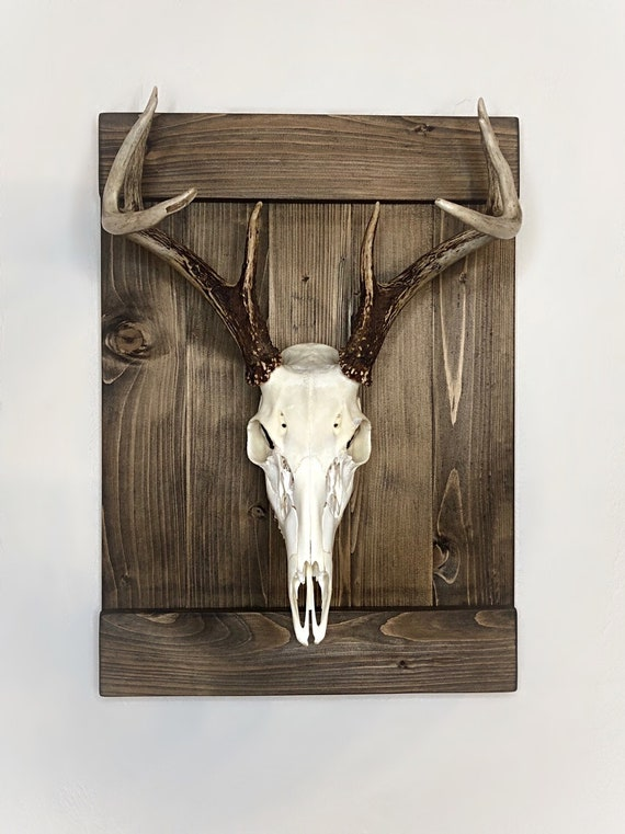 Taxidermy European Deer Mounting Panel With 4x6 window for photo display