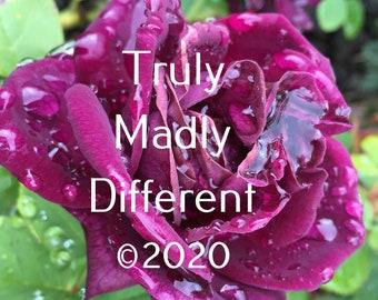 Purple Rose after the Rain Digital Print
