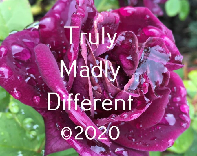 Featured listing image: Purple Rose after the Rain Digital Print