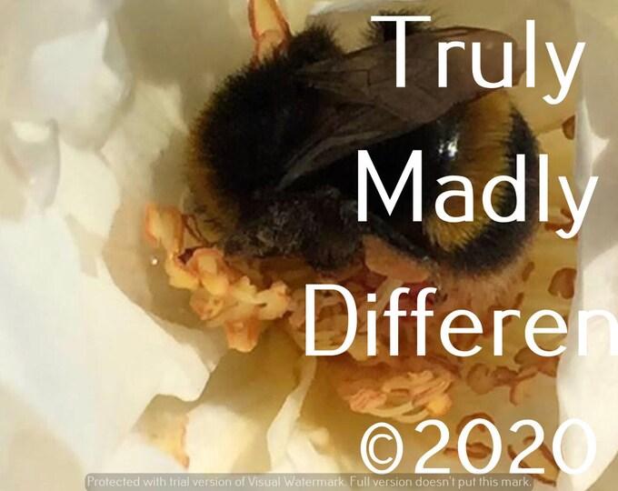 Bumblebee inside Rose Digital Photo