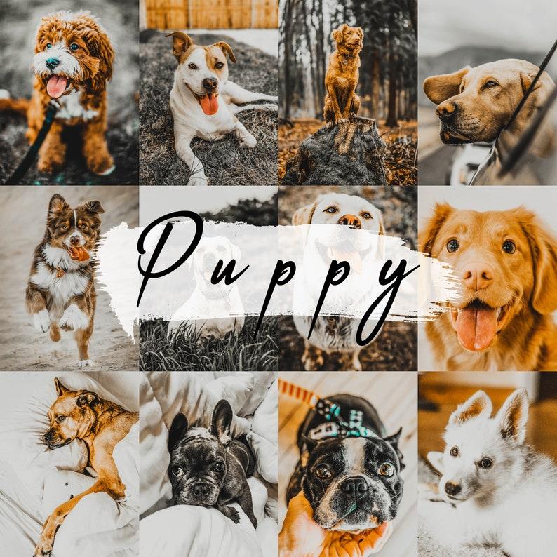 Moody Pet Photography Kit, Lightroom Mobile Presets Dog, Presets for dogs,  Preset dog, Dog portrait presets, dog photography, fox presets