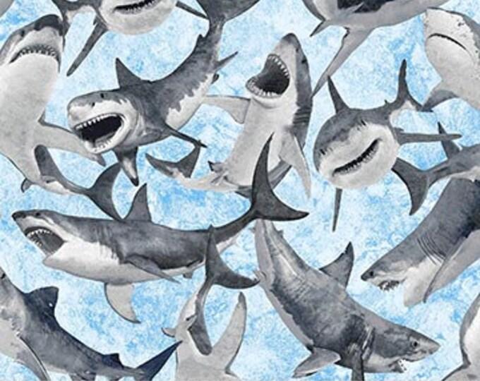 NOR, Shark Attack blue background