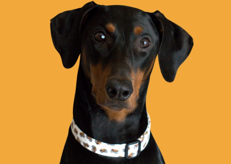 Fall Fabric THE ACORN 100/% Soft Cotton Fabric Collar Acorn Cat Collar Acorn Dog Collar