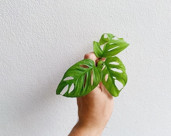 Indoor plants | Etsy