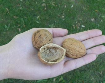 Walnut Shells Halves | Empty Walnut shells to use as craft supplies | Half Walnut shells | Set of 10 Walnut Shells ideal for Candle crafts