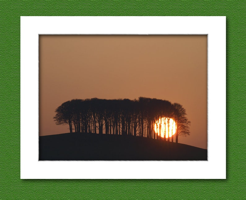 Picture of The nearly home trees UK. image 0